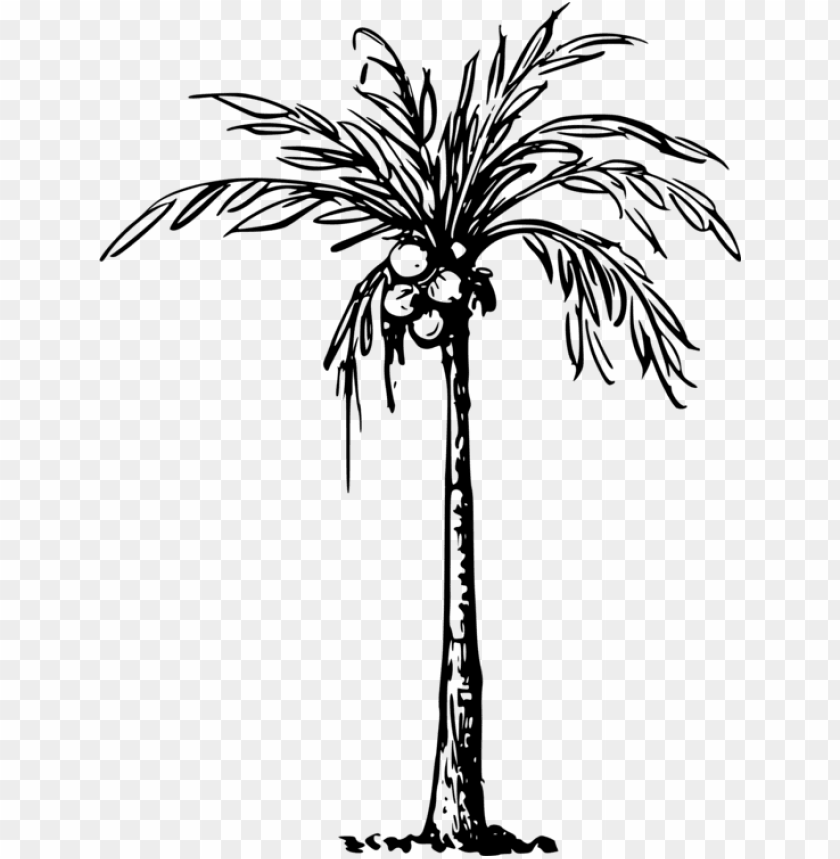 Of Coconut Tree Png Image With Transparent Background Toppng
