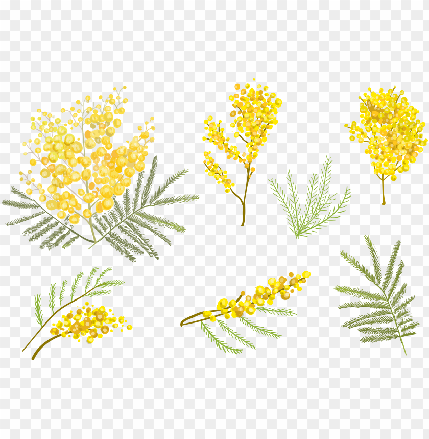 oldenrod drawing watercolor yellow flower vector png image with transparent background toppng yellow flower vector png image with