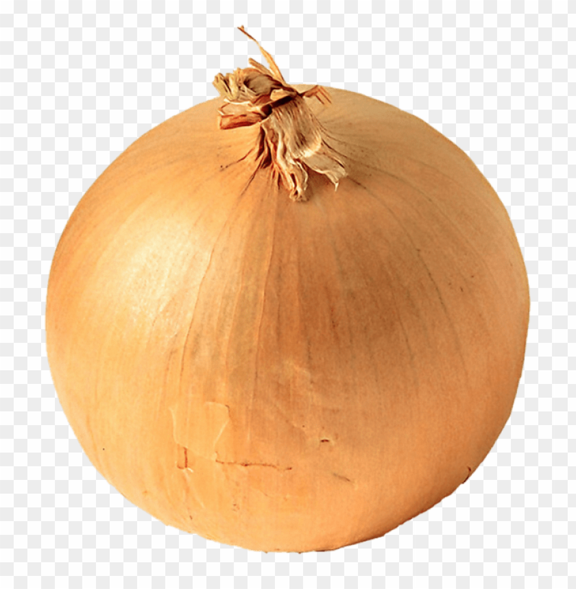 download onion png images background toppng