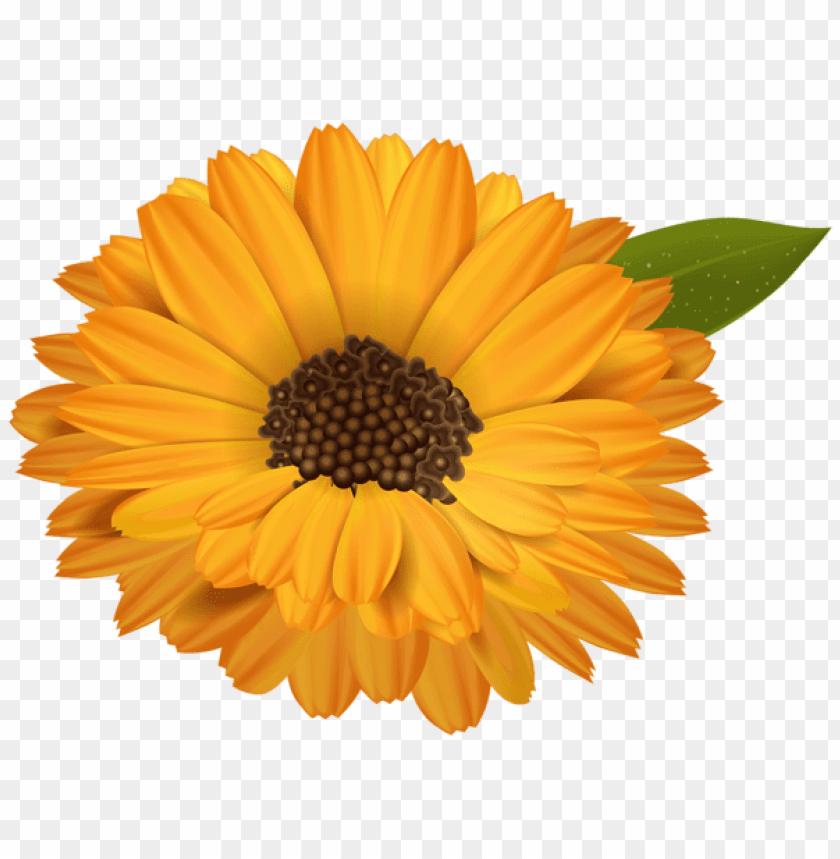 free PNG Download orange flower transparent png images background PNG images transparent
