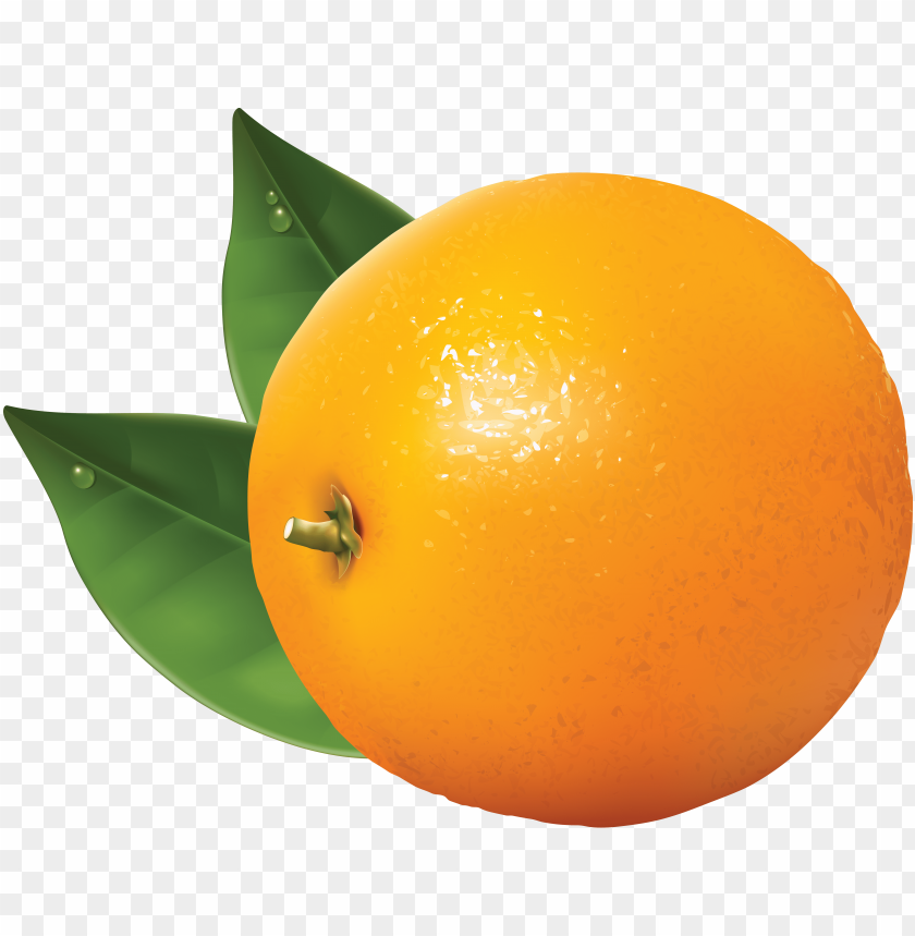 orange clipart png free png images toppng rh toppng com oranges clipart free oranges clipart free