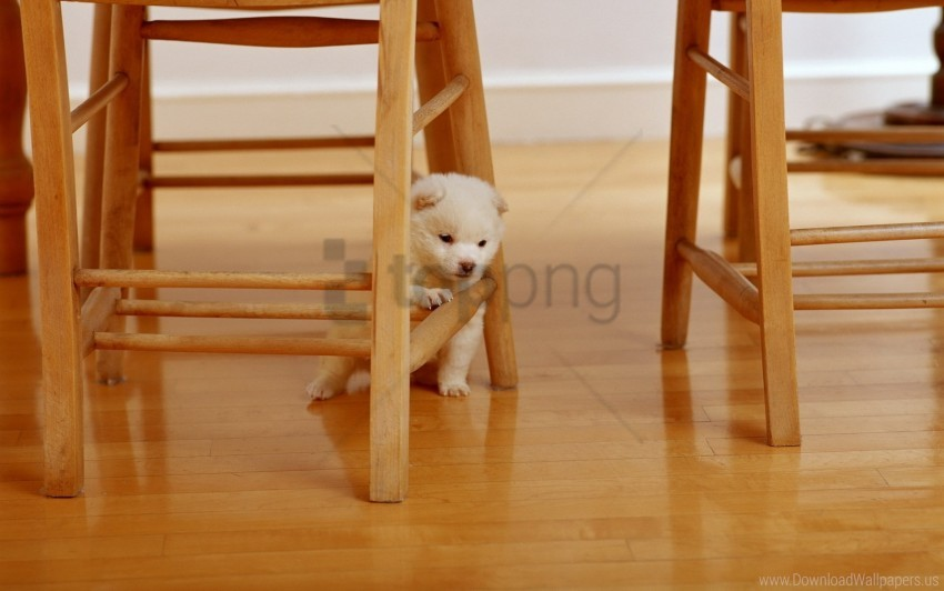 free PNG parquet, paws, puppy wallpaper background best stock photos PNG images transparent