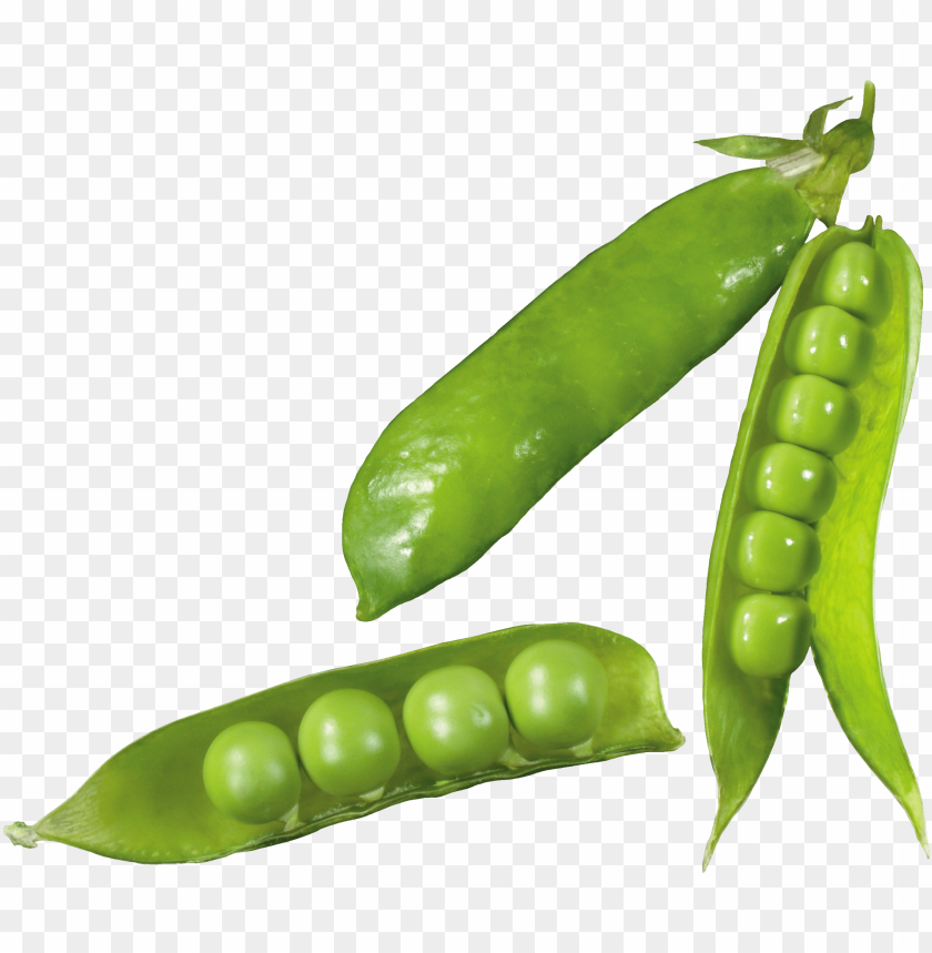 free PNG Download pea png images background PNG images transparent