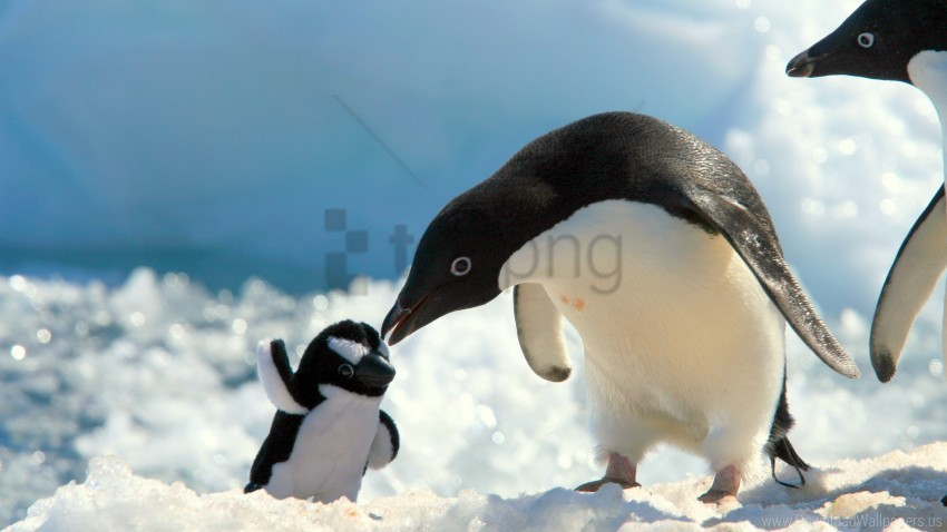 free PNG penguin toy snow wallpaper background best stock photos PNG images transparent