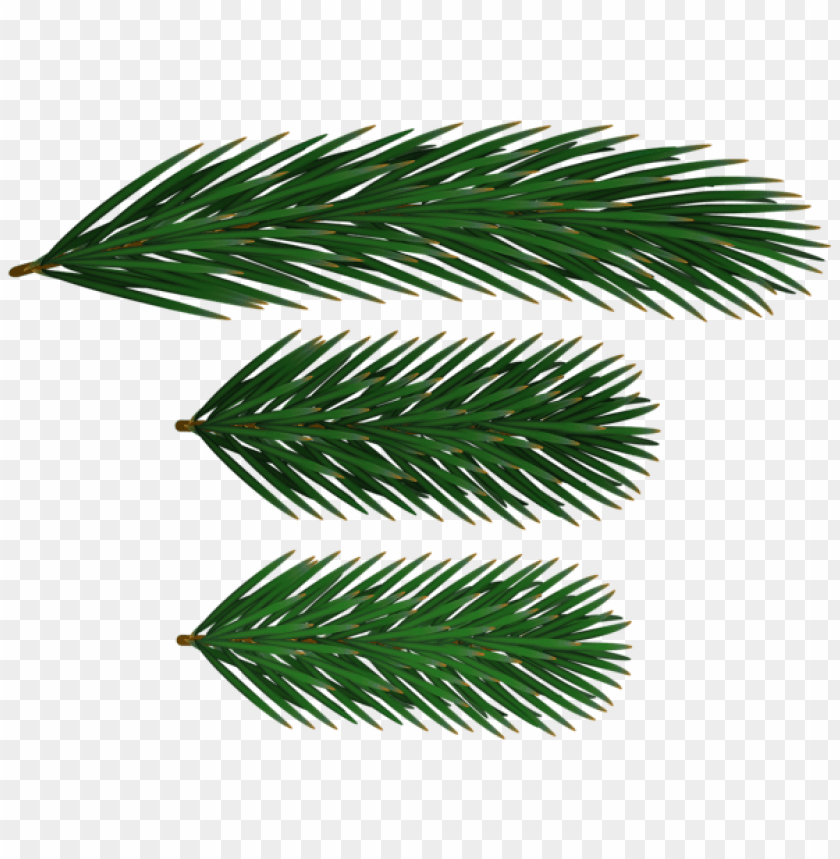 free PNG pine branches png png - Free PNG Images PNG images transparent