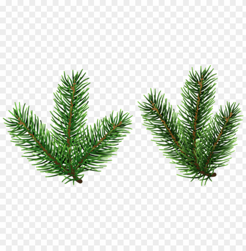 free PNG pine tree branches png png - Free PNG Images PNG images transparent