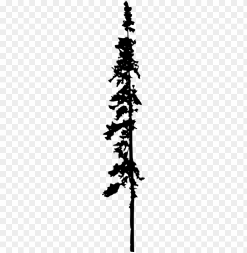 free png Pine Tree Silhouette PNG images transparent