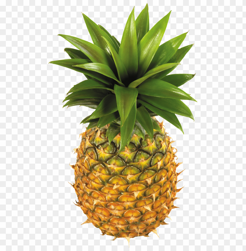 free PNG pineapple fruit PNG images transparent