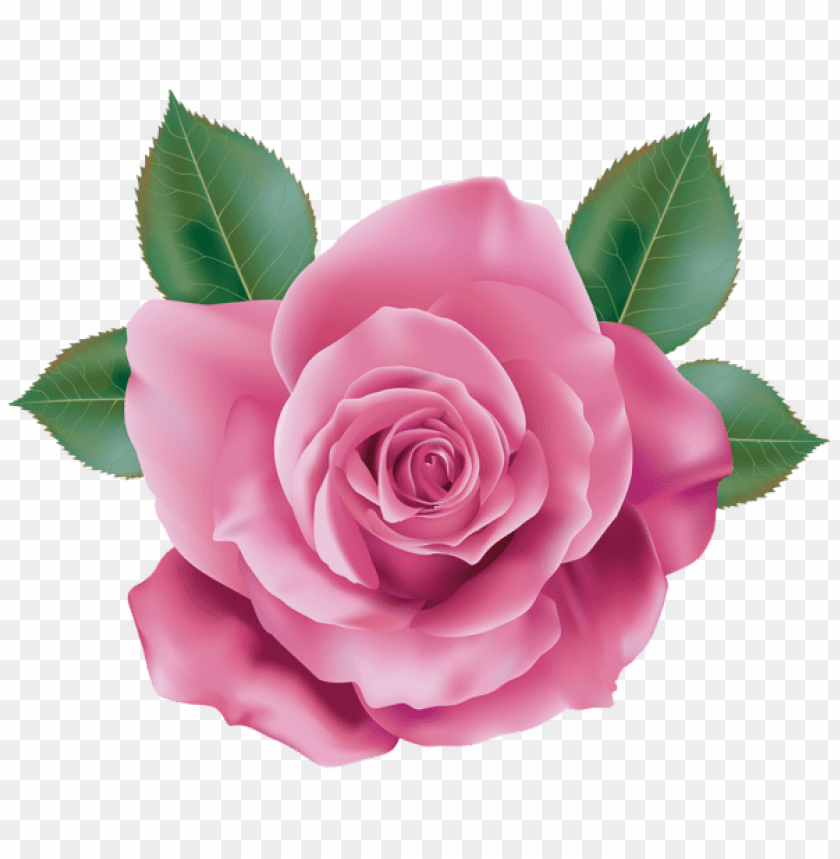 Download Pink Rose Png Images Background Toppng