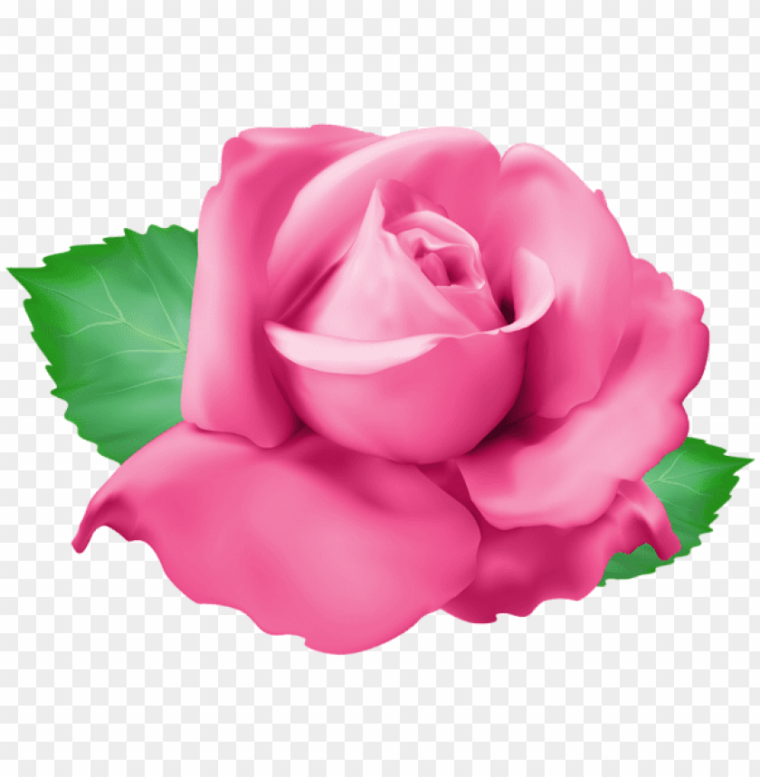 Download Pink Rose Png Png Images Background Toppng