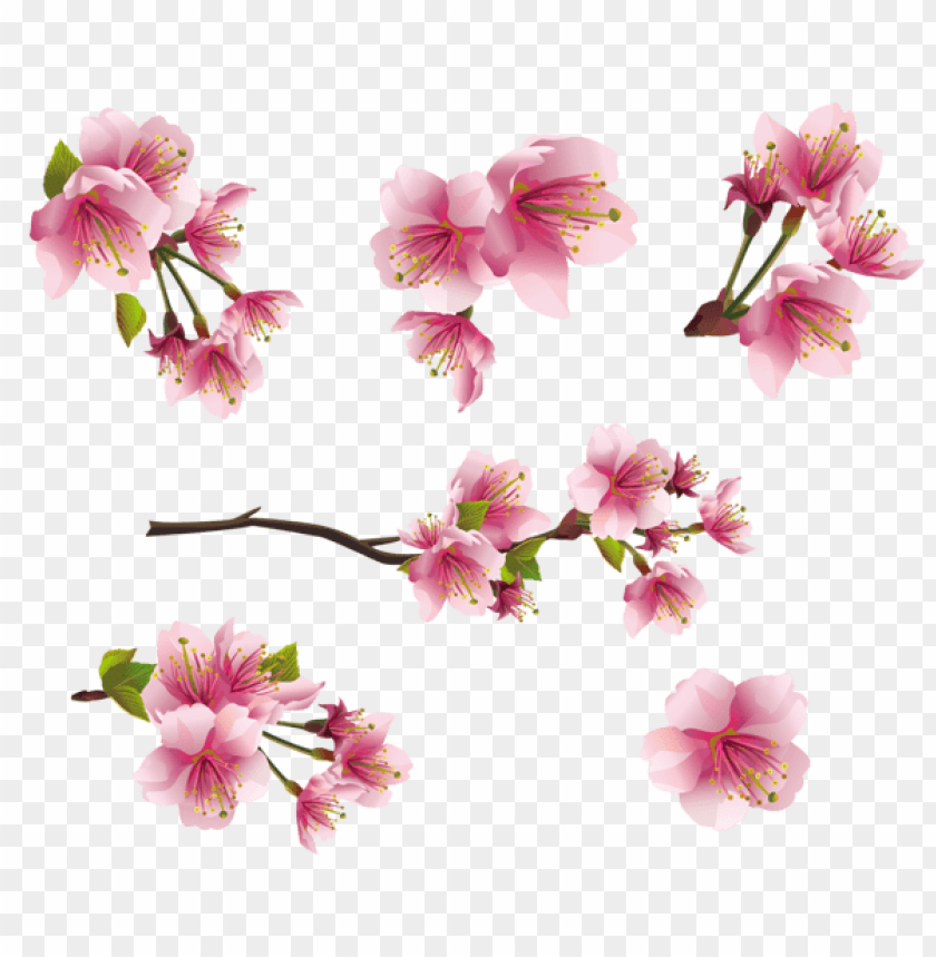 free PNG Download pink spring branch elementspicture png images background PNG images transparent