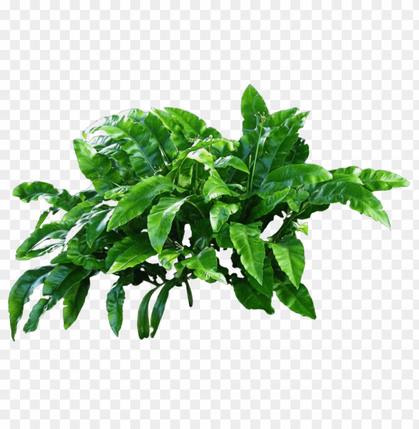 plants png - Free PNG Images | TOPpng