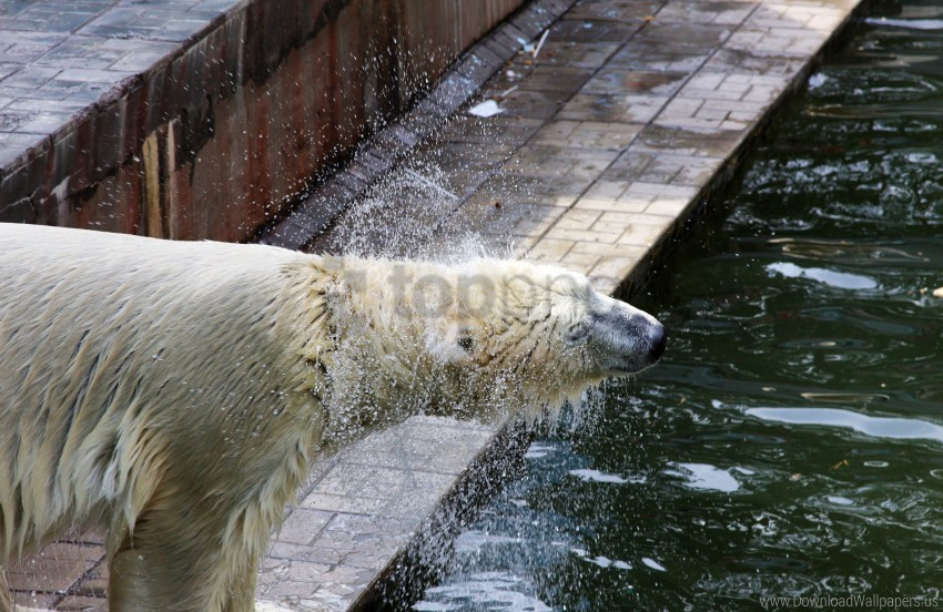 free PNG polar bear, spray, water wallpaper background best stock photos PNG images transparent