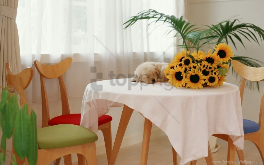 free PNG puppy, sunflowers, table wallpaper background best stock photos PNG images transparent