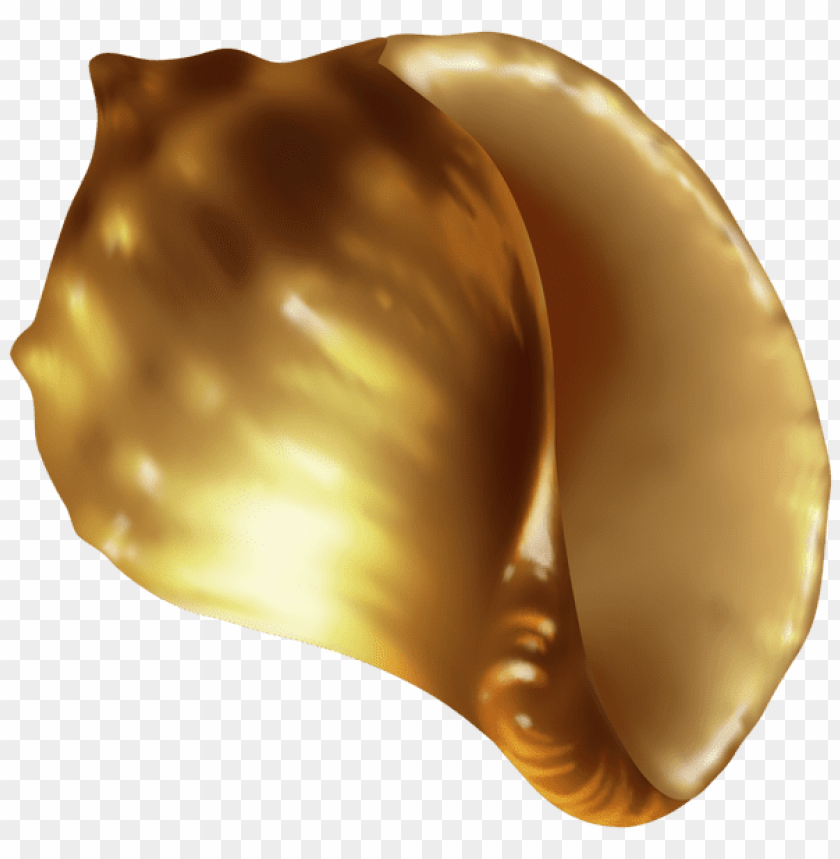 free PNG rapana shell PNG images transparent