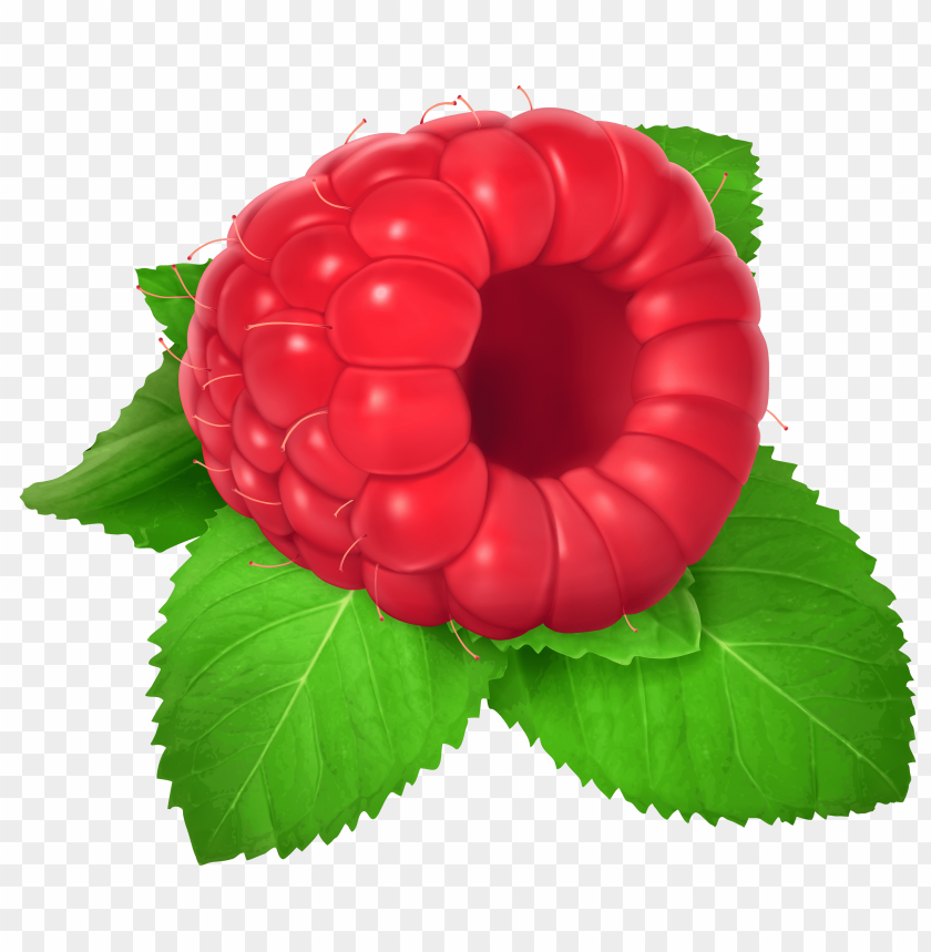 free PNG raspberry PNG images transparent