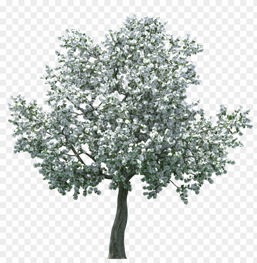free PNG realistic blossom tree PNG images transparent