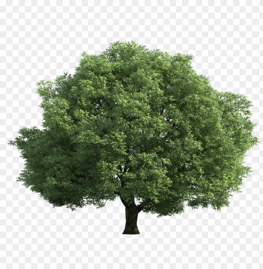 free png realistic green tree PNG images transparent