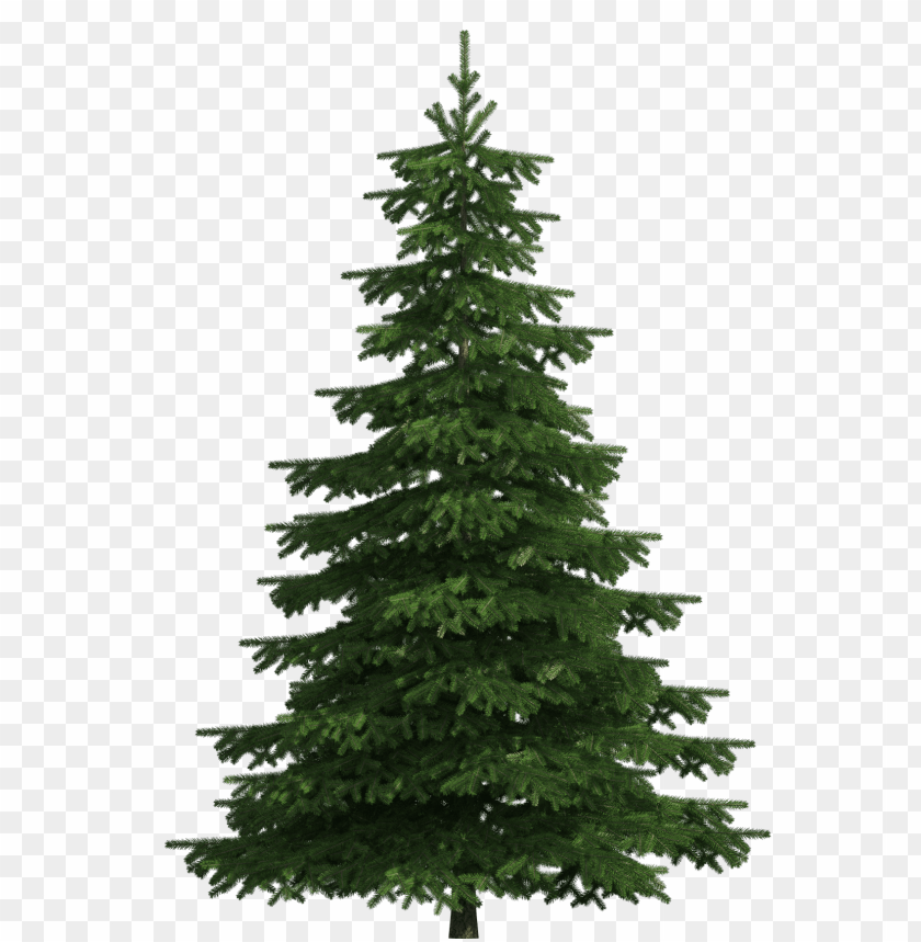 free png realistic pine tree PNG images transparent