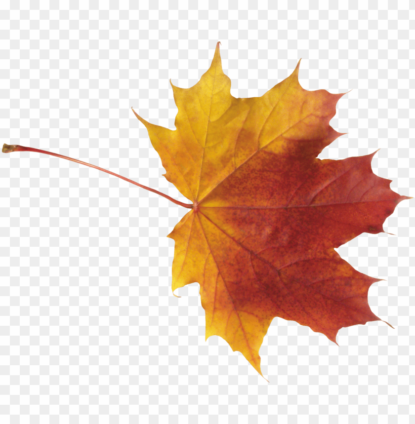 Download red leaves png images background@toppng.com