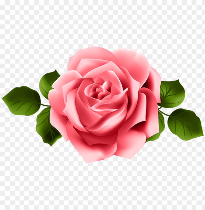 Download Red Rose Png Images Background Toppng