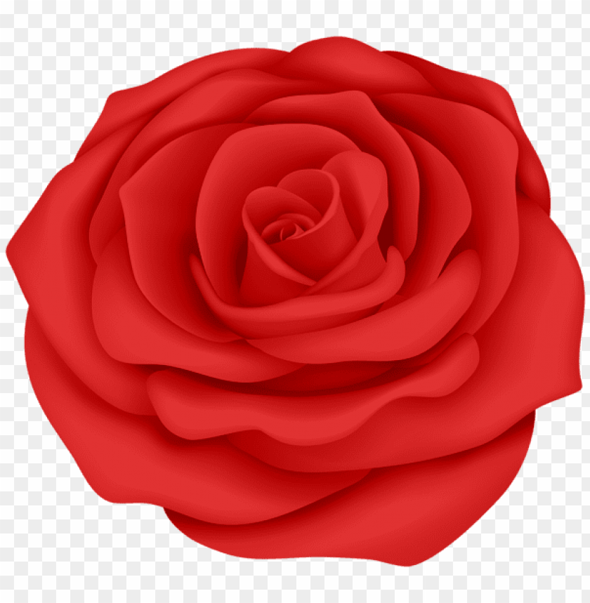 Download Red Rose Flower Transparent Png Images Background Toppng