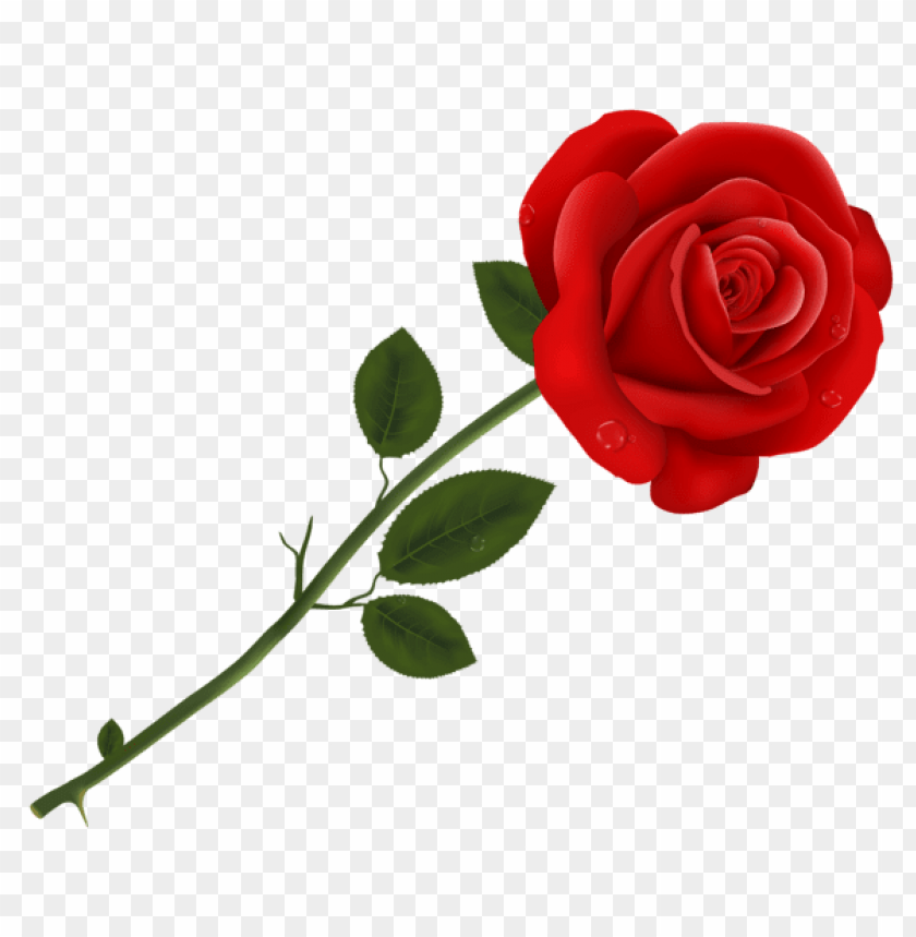 Download Red Rose Transparent Png Images Background Toppng