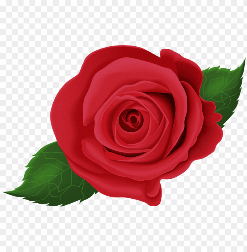 free PNG Download red rose with leaves png images background PNG images transparent