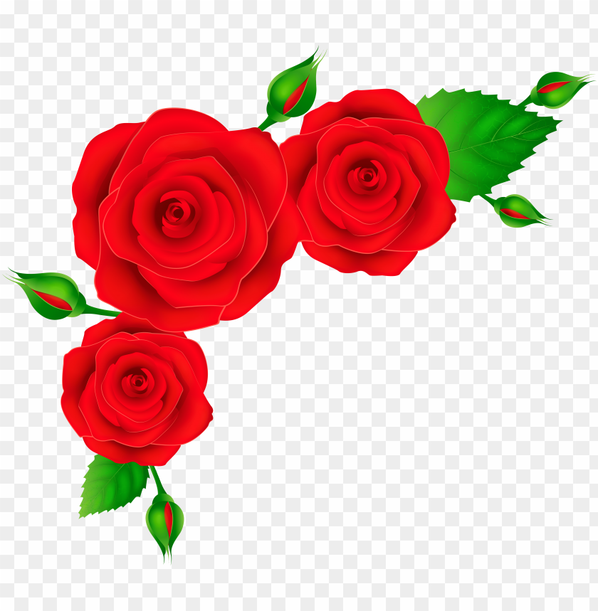 red roses corner transparent png clip art image PNG image with transparent background@toppng.com