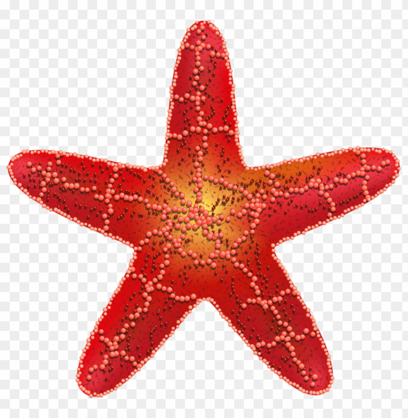 free PNG red starfish PNG images transparent