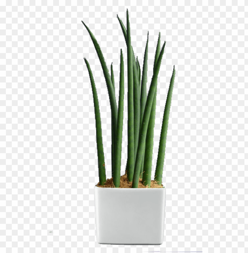 free PNG reen world builders inc - indoor plants in the philippines PNG image with transparent background PNG images transparent