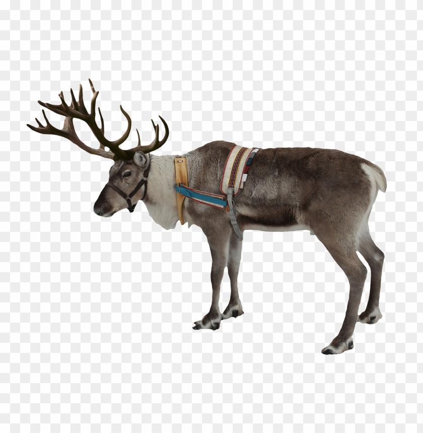 free png reindeer PNG images transparent