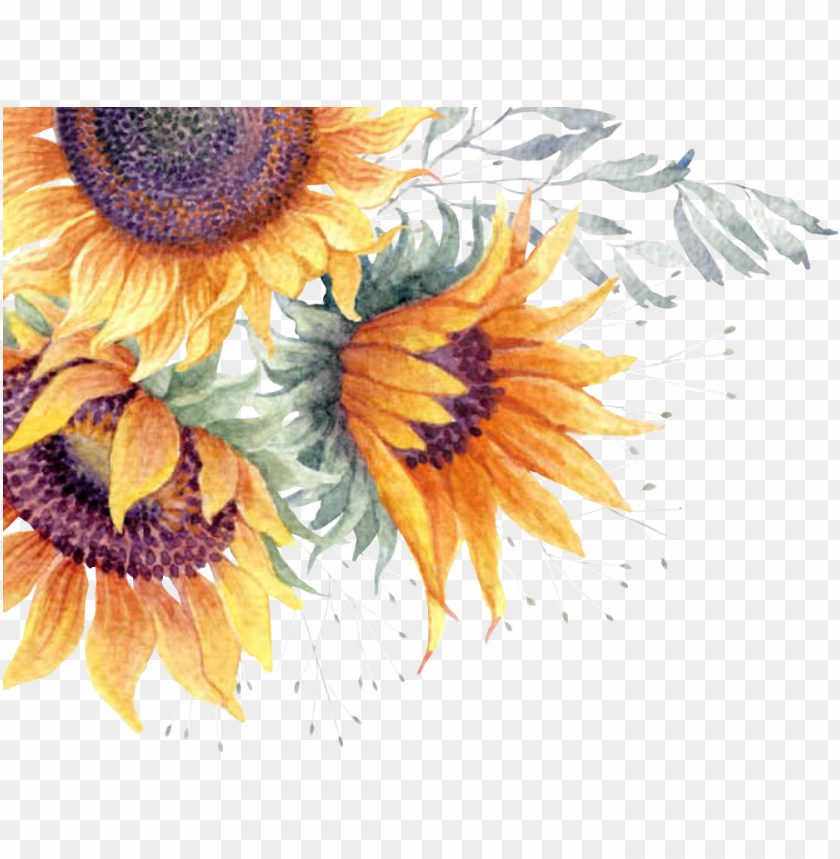 Report Abuse Transparent Sunflower Watercolor Png Image With Transparent Background Toppng