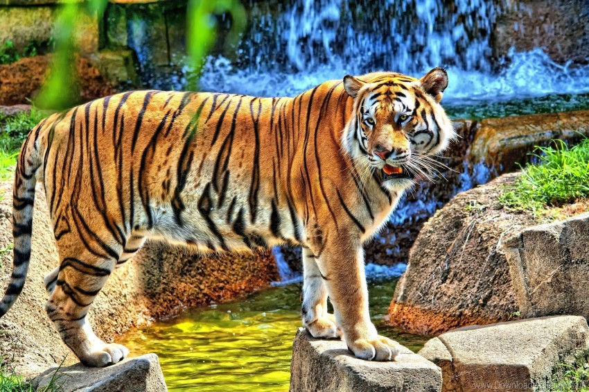 free PNG rocks, standing, tiger, watching, waterfall wallpaper background best stock photos PNG images transparent