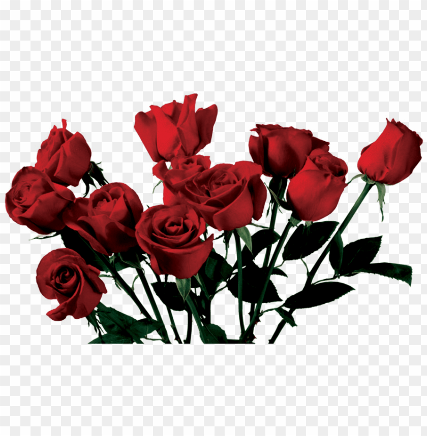Rose Aesthetic Png Image With Transparent Background Toppng