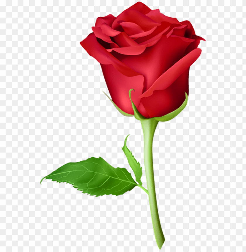 Rose Red Transparent Png Free Png Images Toppng