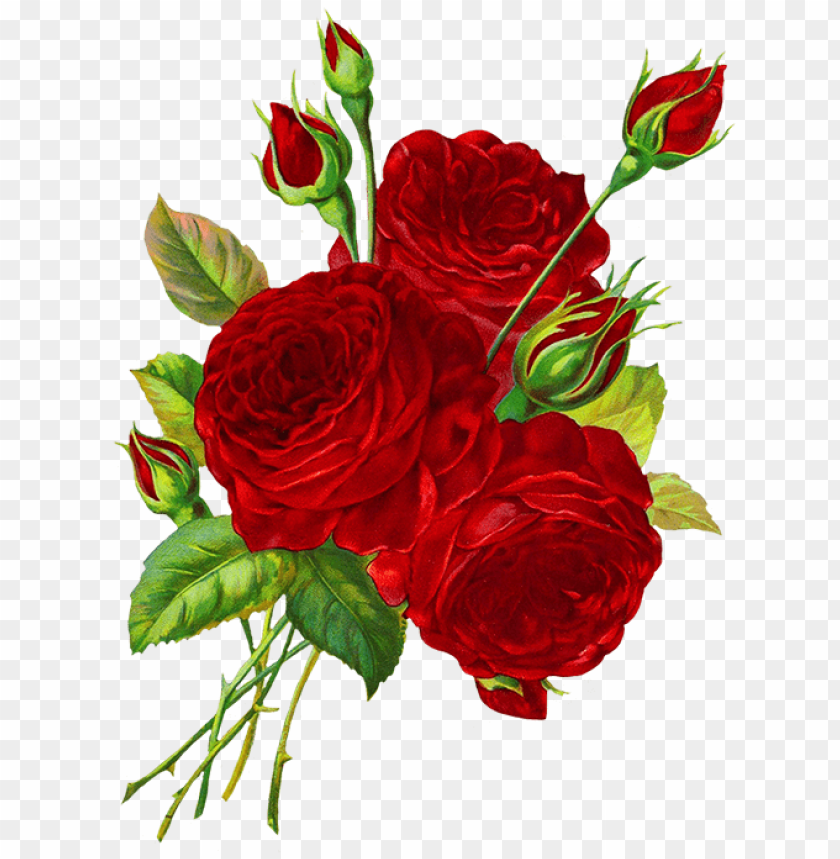 Roses Red Drawing Png Image With Transparent Background Toppng