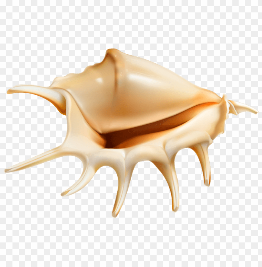 free PNG sea conch PNG images transparent