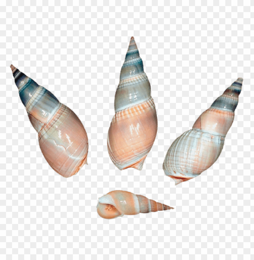free PNG sea snail shells png PNG images transparent