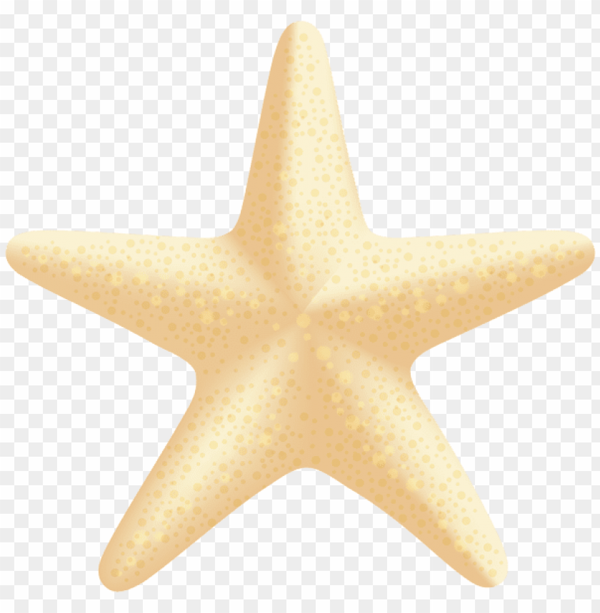 free PNG sea star PNG images transparent