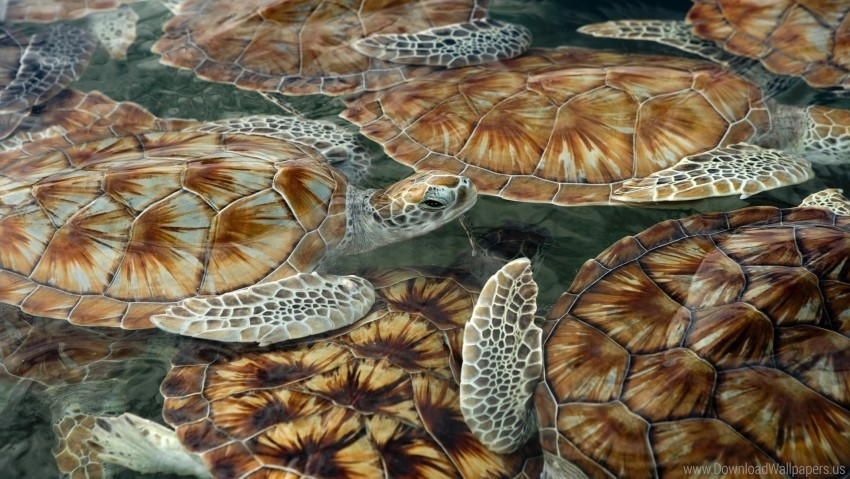 free PNG sea, swim, tortoises, turtles wallpaper background best stock photos PNG images transparent