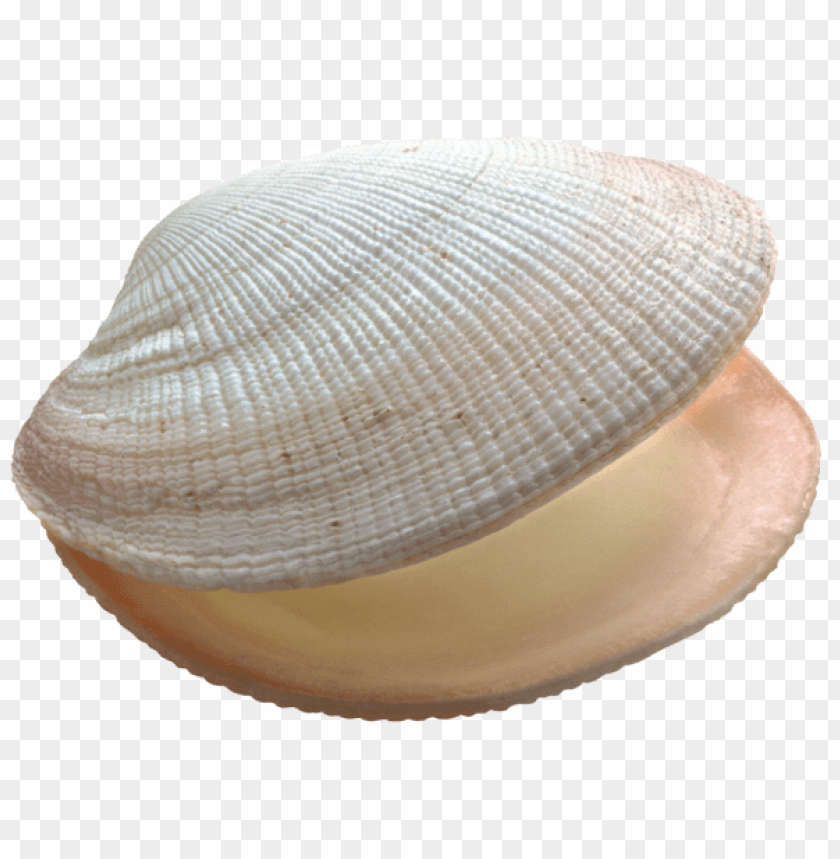 free PNG shell PNG images transparent