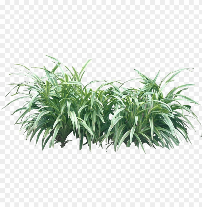 shrub png transparent image - bushes PNG image with transparent
