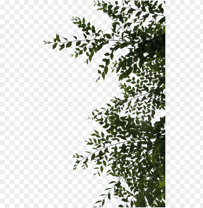 free PNG sidebar or overhang leaves png by evelivesey - leaves png deviantart PNG image with transparent background PNG images transparent