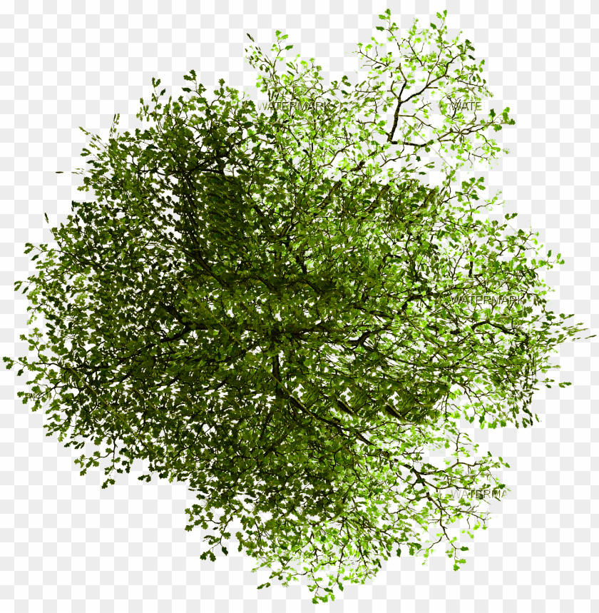 free PNG site architecture transprent free - tree plan png photosho PNG image with transparent background PNG images transparent