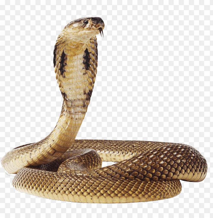 free PNG Download snake png images background PNG images transparent