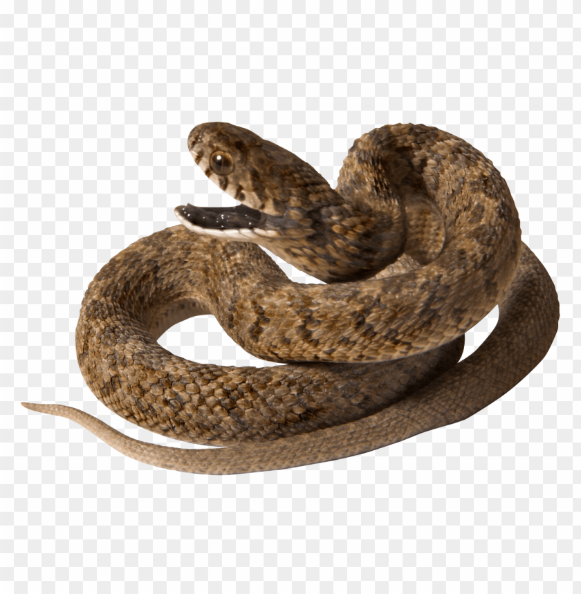 free PNG Download snake with opened mouth png images background PNG images transparent