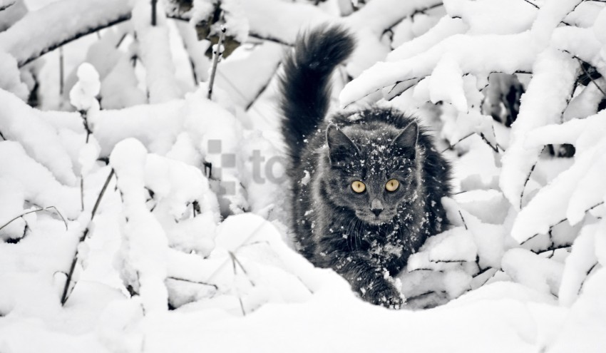 free PNG snow, the cat, winter wallpaper background best stock photos PNG images transparent