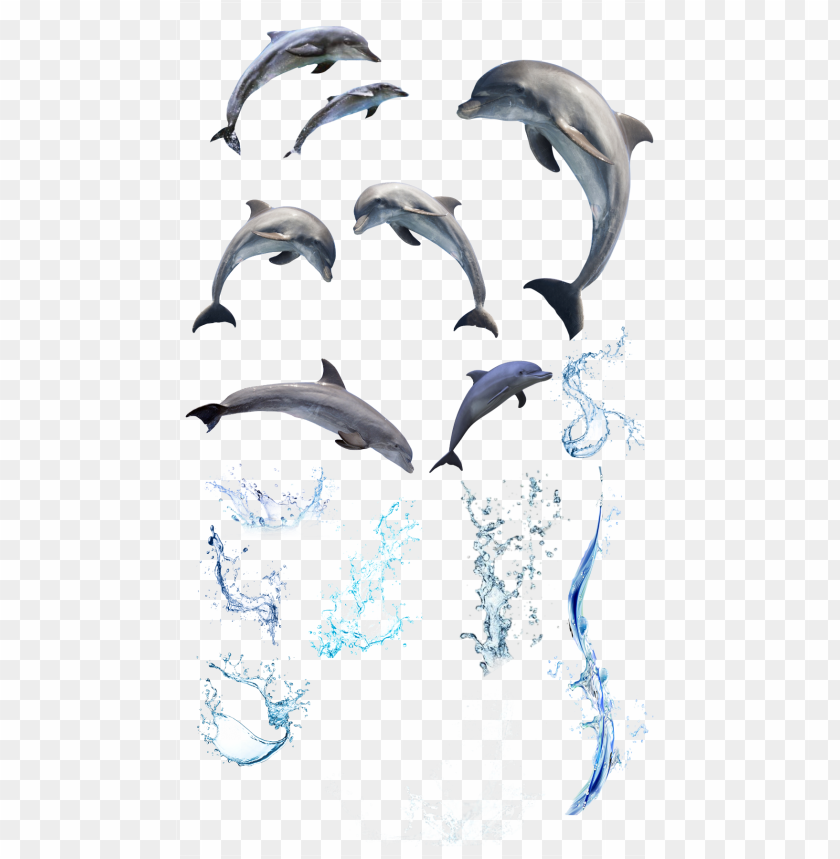 free PNG splash dolphins water sea sealife ocean - beach bath book - bath book PNG image with transparent background PNG images transparent
