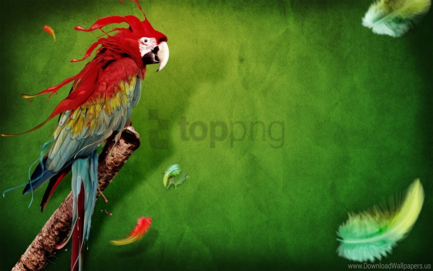 free PNG splash of parrot wallpaper background best stock photos PNG images transparent